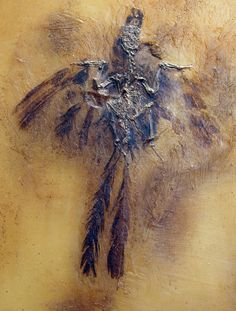 Parargornis messelensis, bird from Messel (Eocene). Jura Museum, Eichstatt, Germany