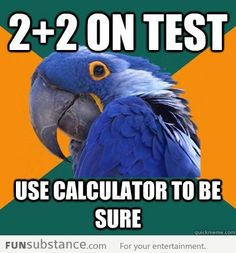 Paranoid Parrot doing math. Lol. This is the truth!