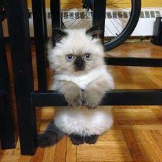 Miss my girlfriend #catlove #kitty #catlife #ilovemypet #pet #cat #catstagram#ilovecat #catoftheday #catsofworld #catlover