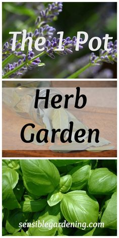 The 1 pot herb garden with Sensible Gardening