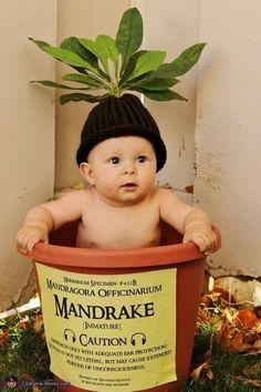 Mandrake from Harry Potter