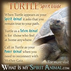The most in-depth Amphibian & Reptile Symbolism & Meanings! Amphibian & Reptile as a Spirit, Totem, & Power Animal. Dream interpretation included, too!