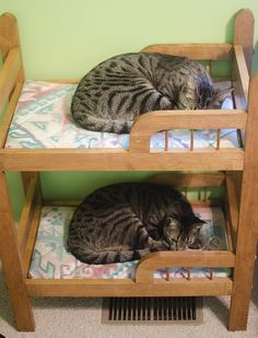 """Cat Roomies Save Space With Bunk Beds It may seem a little juvenile, but bunk beds are all the rage for young professionals with a high cost of living. Chester and Conrad share a one-bedroom apartment on New York City's Lower East Side, but they maximize their space with stackable mattresses. """"There's no way they could afford a two-bedroom on cat salaries,"""" says Shelly Tegan, a resident in the same building. """"Not in this neighborhood anyway."""" Via Solid_Wife."""