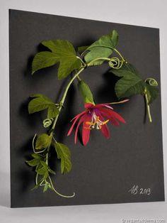 Passion Flower (Passiflora mollissima), 3-D crepe paper sculpture by Aimée Baldwin