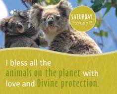 Bendigo a todos los animales del planeta con amor y divina protección.
