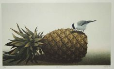 Optio - Haiku, Berries, Art Gallery, Birds, Illustrations, Fruit, Finland, Landscapes, Paisajes