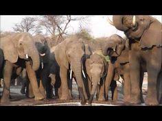 Australia0811 Travels - Journey Through Africa - Elephant Sands, Kalahari Desert, Botswana