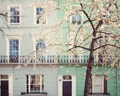 London Photography, Blossoms, Notting Hill, Mint Green, Home Decor, Wall Art, Print, Windows - I Love London in the Springtime