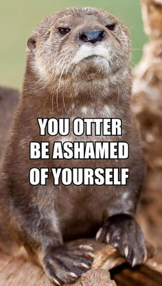 """otter pun so cute I have a tee shirt that says """"you otter be on the water"""" with a kayaking otter"""