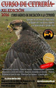 curso de #cetreria y #adiestramiento de #aves #rapaces en #segovia ...