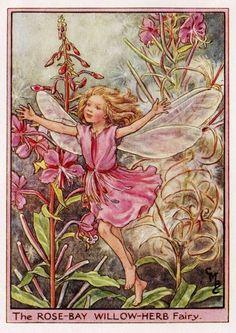 RoseBay WillowHerb Flower Fairy Vintage Print by TheOldMapShop