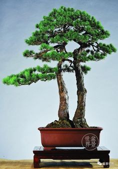Bonsai Styles, Bonsai Garden, Flora, Gardens, Ikebana, Pretty, Nature, Pots, Artists
