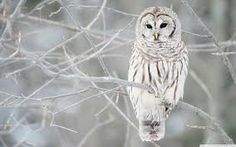 animals in winter - Google Search