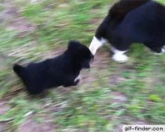 Cool cat meets rottweiler pup | Gif Finder – Find and Share funny animated gifs