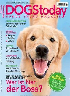 Wie Hunde bestimmen, wo es langgeht - Wer ist hier der Boss? Gefunden in: DOGS Today - epaper als Download kaufen, Nr. 3/2015