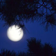 New Moon by Nancy Berry