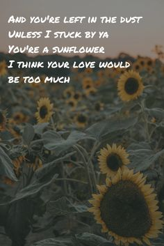 Sunflower by Swae Lee, Post Malone lyrics // And you're left in the dust// unless I stuck by ya // you're a sunflower // I think your love would be too much. Iphone Wallpaper Quotes Love, Song Lyrics Wallpaper, Music Wallpaper, Song Lyric Quotes, Music Lyrics, Music Quotes, Smile Quotes, Song Lyric Tattoos, Post Malone Lyrics