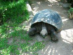 bermuda zoo and aquarium | Jalan - Jalan ke pulau Bermuda Yuk Gan ... | Kaskus - The Largest ...