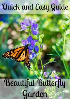 Your quick and easy guide to a Beautiful Butterfly garden