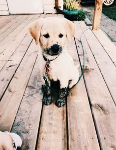 hound dog puppy dogsofvsco is part of Cute animals - hound dog puppy Cute Little Animals, Cute Funny Animals, Funny Dogs, Hound Dog Puppies, Cute Dogs And Puppies, Doggies, Puppy Husky, Puppy Chow, Maltese Dogs
