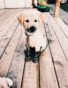 hound dog puppy dogsofvsco is part of Cute animals - hound dog puppy Baby Animals Pictures, Cute Animal Pictures, Puppy Pictures, Animals And Pets, Hound Dog Puppies, Cute Dogs And Puppies, Little Puppies, Doggies, Puppy Husky