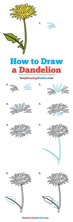 Learn How to Draw a Dandelion: Easy Step-by-Step Drawing Tutorial for Kids and Beginners. #Dandelion #DrawingTutorial #EasyDrawing See the full tutorial at https://easydrawingguides.com/how-to-draw-a-dandelion/.