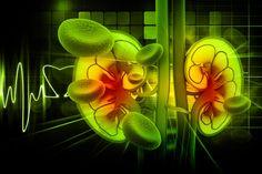 Neues aus der Krebsforschung.Patientenleitlinien zum Nierenkrebs. Lesen Sie dazu den Beitrag hier:   http://der-seniorenblog.de/medizin-gesundheit/krebserkrankungen/krebs-news/ . Bild: fotolia