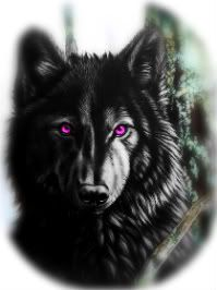 black wolf with purple eyes - Google Search