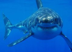 I think some people are like Great White Sharks. Mean, misunderstood, and they have no idea that they are who they are. No idea that they're feared. No idea...