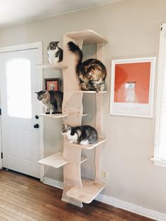 This photo proves how much cats love our new Grove climbing system! Contempocat creates cat furniture that you will be proud to have in your home. Our designs add life to your decor, as well as creating a functional place for your felines to hang out. Photo by Priscilla Forehand