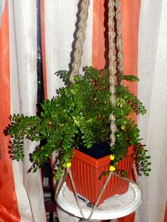 How to make Beautiful Plant Hangers You can see variegated types of hanging planters made from jute and rope. These plant hangers make your indoor garden beautiful. Though this craft is easy to find in the market or you can easily create a short attempt, at the same well you also use your free time, Here some of the pictures are showing, you can making it easily sometime later. You can learn it easily on our website. See more..http://naturebring.com/blog/make-beautiful-plant-hangers/