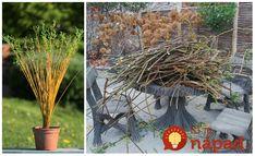 Krásne nápady, ako si vyrobiť krásnu živú dekoráciu do záhrady, na terasu alebo napríklad aj na balkón. Vŕbové prútie ľahko zakorení a keď bude rásť, stačí ho správne formovať a môže vám vytvoriť úžasné živé sochy. Nápady, ako ohybné prútie využiť: Garden Trellis, Plants, Flora, Plant, Planting
