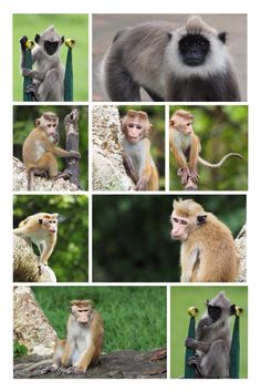 Sri Lanka, Animals, Animales, Animaux, Animal, Animais