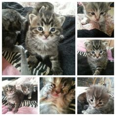 My adorable kittens♥ wish I could keep each of them