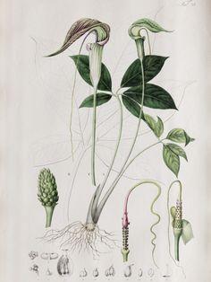 Botanische prints aan de muur Mooiwatplantendoen.nl