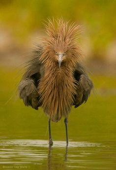 .morning hair...