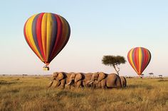 One day, I want to go on a hot air balloon safari. Photo by Abercrombie via Out and About Africa.