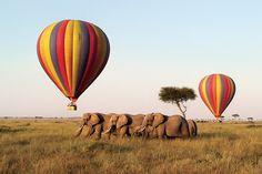 Bucket List! Hot-air Balloon Safari. Masai Mara, Kenya.