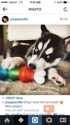 Joey Graceffa just adopted this cute little fella, and everybody including Joey himself is just in love with him!  Are you as obsessed with Wolf as I am? :D