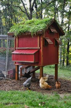 Create a garden roof on your chicken coop! It helps keep the coop cool in summer and warmer in winter, and looks gorgeous. What a fabulous idea - wish I had thought of it first!