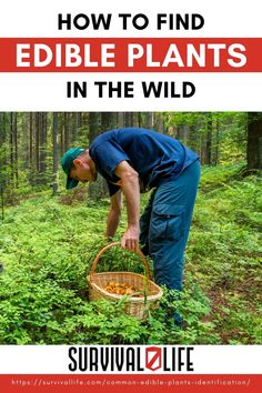 In a survival situation, calories count BIG TIME. Unfortunately, most of the stuff you hunt down can run a lot faster than you… Why not make the best of Mother nature's gifts by learning how to identify edible plants in the wild right outside your home or camp? Read on to know how! #edibleplants #survivalfood #survivalskills #survival #preparedness #survivallife Off Grid Survival, Survival Life, Survival Food, Wilderness Survival, Camping Survival, Emergency Preparedness, Survival Skills, Survival Stuff, Family Emergency Binder