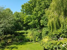 My garden in Surrey, England Pt. 2 |  |  - #funny #lol #viralvids #funnypics #EarthPorn more at: http://www.smellifish.com