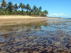 TAIPUS.NET - Praia de Taipu de Fora - Península de Maraú - Sul da Bahia