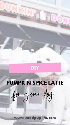 """Make your dogs their very own pumpkin spice """"latte"""" treat for with only 3 ingredients that can be served as a drink or a frozen treat! 