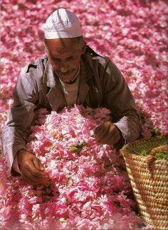 Morocco- rose fields