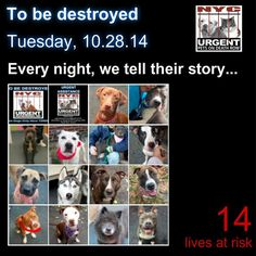 TO BE DESTROYED: 14 Dogs to be euthanized by NYC ACC- TUES. 10/28/14. This is a HIGH KILL shelter group. YOU may be the only hope for these pups! ****PLEASE SHARE EVERYWHERE!!! To rescue a Death Row Dog, Please read this:  http://urgentpetsondeathrow.org/must-read/    To view the full album, please click here:    https://www.facebook.com/media/set/?set=a.611290788883804.1073741851.152876678058553&type=3