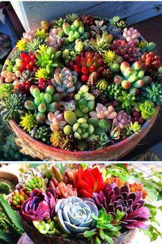 Warm Toned Succulents – Famous Last Words Planting Succulents, Planting Flowers, Succulent Plants, Succulent Ideas, Colorful Succulents, Succulent Care, Succulents In Containers, Container Flowers, Organic Gardening