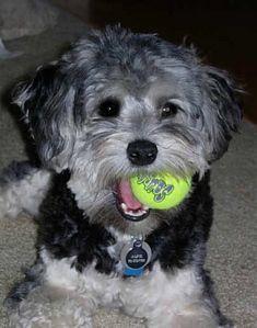 Alfie loves his ball!