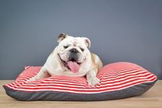 Designer Dog Bed (Me