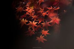 red and black by Ryota Shimizu on 500px